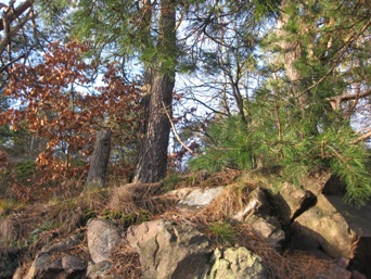 slottskog2