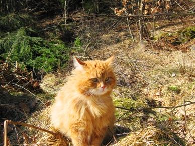 katt5