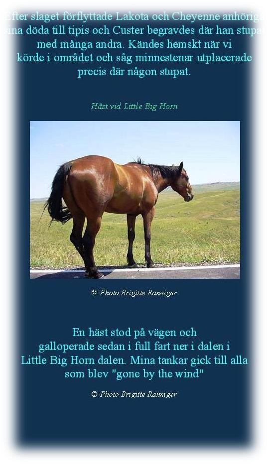 littlebighorn_2003