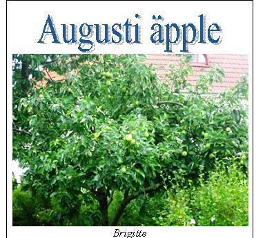 augustiapple1