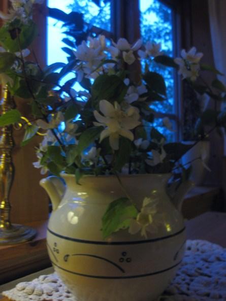 blomkruka1