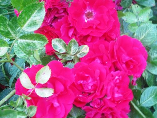 blomma11