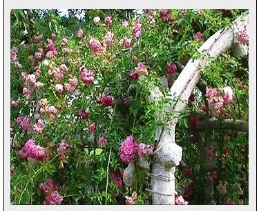 blomsterportal2